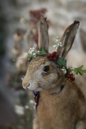 Christmas Hare